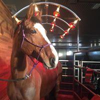 Quadriga Horse Transport